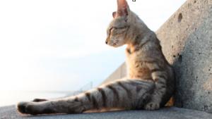 座りすぎ 猫背