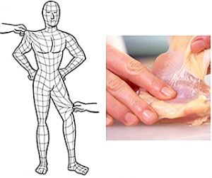 筋膜の例え