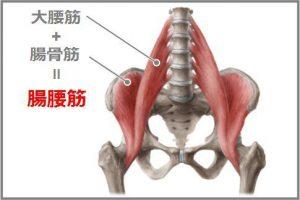 腰痛の原因になりやすい腸腰筋の解剖図です。