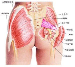 臀部周りの筋肉です。