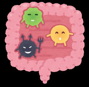 腸内細菌が代謝に影響